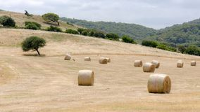 Harvest in Sardinia. Harvesting Bales of Hay in Sardinia Royalty Free Stock Images