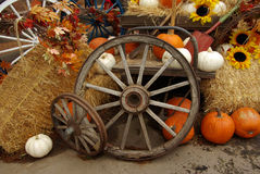 Harvest scene Royalty Free Stock Images