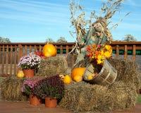 Harvest Scene Royalty Free Stock Image