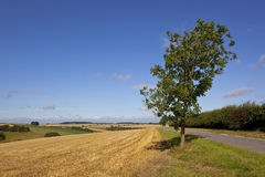 Harvest scenery Royalty Free Stock Photos