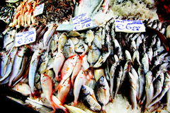 Fish for sale on fish stall. Fish for sale in the Fish Market, Rome Royalty Free Stock Photos
