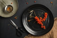The harvest of seabuckthorn stock images
