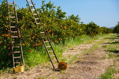 Free Harvest Season Royalty Free Stock Photography - 52324387
