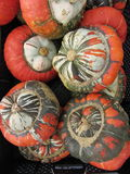 Harvest season and decoration with gourd Stock Image