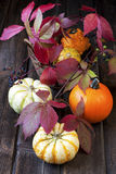Harvest season and decoration with gourd Stock Photography