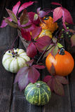 Harvest season and decoration with gourd Royalty Free Stock Photography