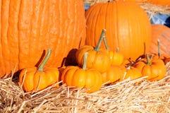 Harvest season Stock Photography