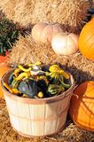 Harvest season Royalty Free Stock Photo