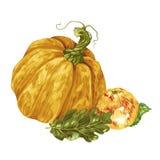 Harvest season decorative element with pumpkin and apple in vector. Illustration vector illustration