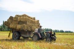 The harvest season Stock Photo