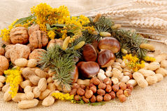 Harvest season, nuts Stock Images