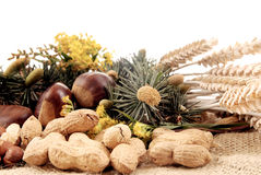 Harvest season, nuts Royalty Free Stock Image