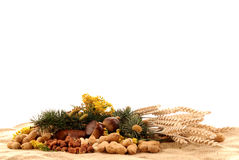 Harvest season, nuts Royalty Free Stock Images