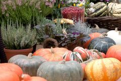 Harvest season and preparations for the next season. Beautiful and diverse pumpkins and flowers in provincial, agriculture stock photography