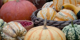 Harvest season and preparations for the next season. A harvest of beautiful mature unusual pumpkins folded, laid in a basket stock images