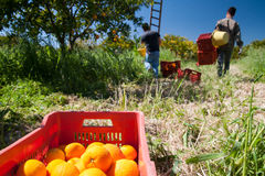 Harvest season Royalty Free Stock Photos