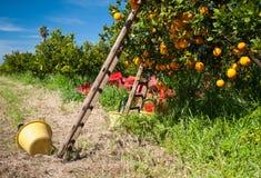 Harvest season Stock Image