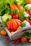 Harvest seasonal vegetables in a wooden box Stock Photography