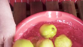 The harvest of apples falls into a basin of water slow motion. The harvest of small apples falls into a plastic bowl with water that is kept by a woman in an stock video
