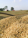 Harvest soybean Stock Photos