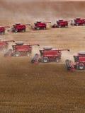 Harvest soybean Stock Photography