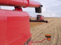 Harvest soybean Stock Photo