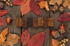 Harvest letterpress with frame of autumn leaves over wood leaves over a rustic wood background Royalty Free Stock Image