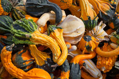 The Harvest of Squashes Stock Images