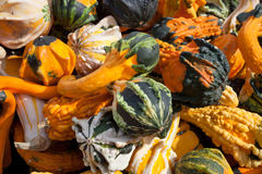 The Harvest of Squashes Royalty Free Stock Photography