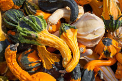 The Harvest of Squashes Stock Photo