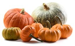 Harvest stillife. Colorful collection of imperfect orange and gr. Een organic pumpkins isolated on white background closeup royalty free stock photos