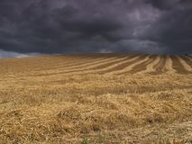 Harvest before the storm. Freshly cut field as storm with storm approaching royalty free stock photo