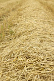 Harvest, straw Stock Photography