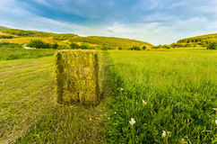 Harvest straw bale Stock Image