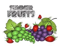 Harvest Strawberry and Grapes. Vector sketch illustration isolated on white Royalty Free Stock Images