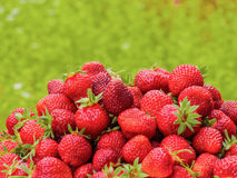 The harvest of the strawberry. Lots of red berries. Blurred green background Stock Photo
