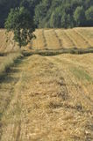 Harvest stubble, the end of summer Royalty Free Stock Images