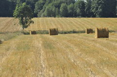 Harvest stubble, the end of summer Royalty Free Stock Photography