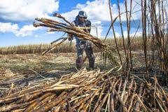 Harvest sugar cane. SÃO PAULO, BRAZIL. APRIL 04, 2008. labour harvest sugar cane in Brazil Stock Photography