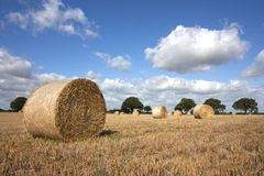 Harvest in summer Stock Photos