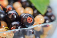 Harvest summer closeup colorful fruit currants Stock Image
