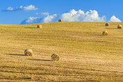 Harvest in summer hot day on countryside Stock Photo