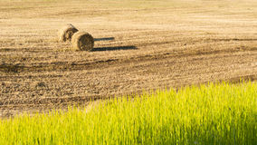 Harvest in summer hot day Stock Photos