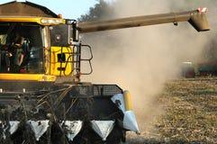 Harvest sunflower Stock Image