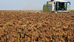 Harvest of sunflower. Grain harvester in the field during harvest sunflower,video clip stock video footage