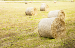 Harvest on sunny field. Royalty Free Stock Image