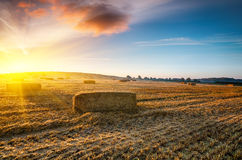Harvest Sunrise Stock Image