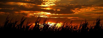 Harvest Sunset Stock Photos