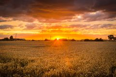 Harvest Sunset. Dramatic sunset over wheat fields in Lincolnshire Stock Photography