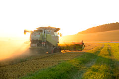 Harvest in the sunset Royalty Free Stock Photo